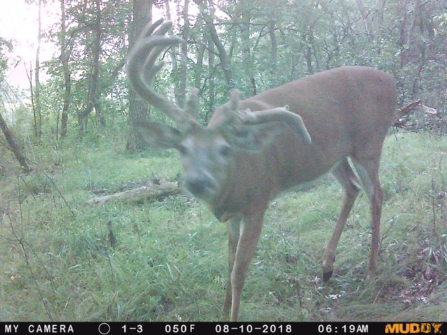 PP-crazy buck-18.jpg